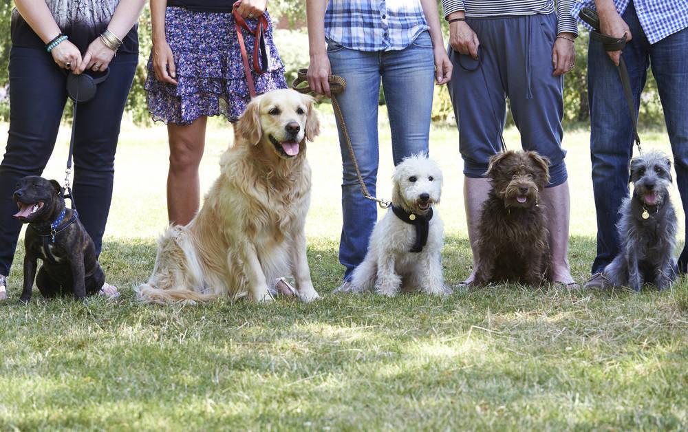 Triunfan las actividades, alojamientos y restaurantes dogfriendly